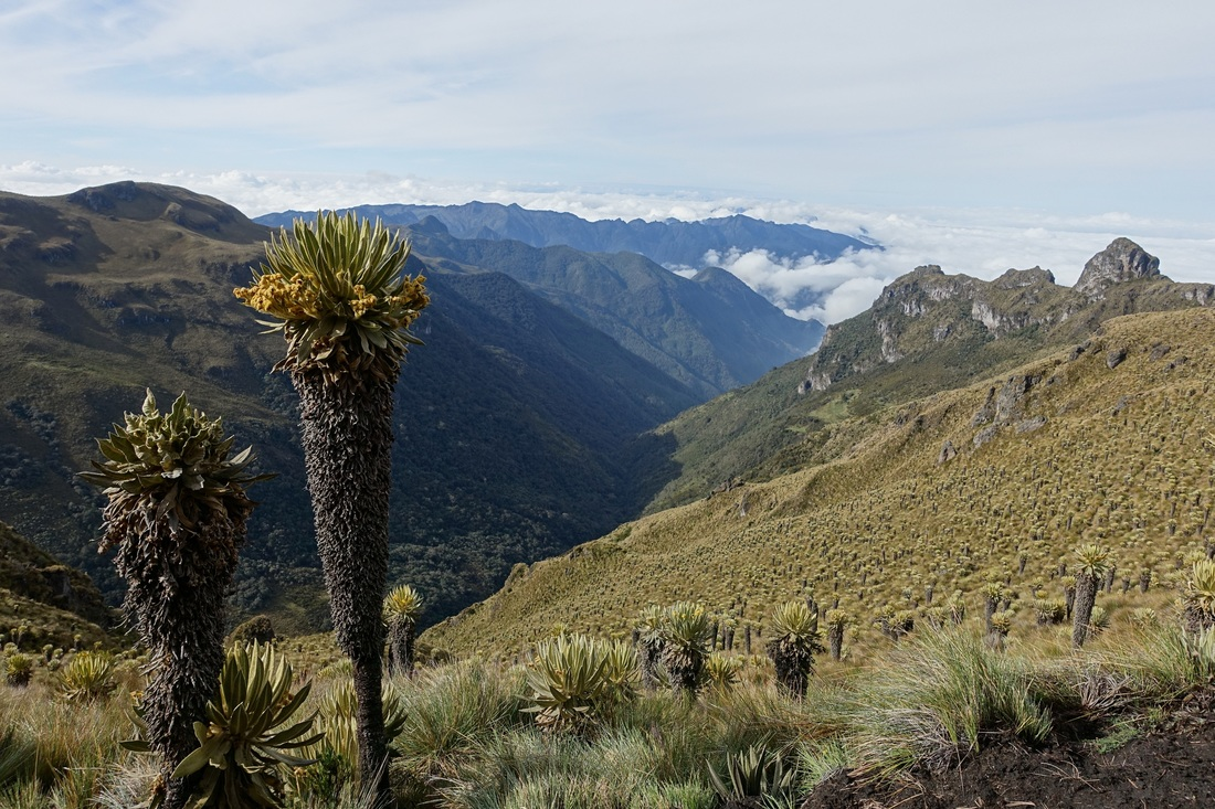 Los Nevados National Park hike in the paramo