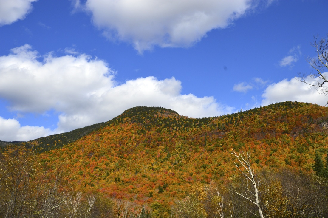Fall colors in the Green Mountains
