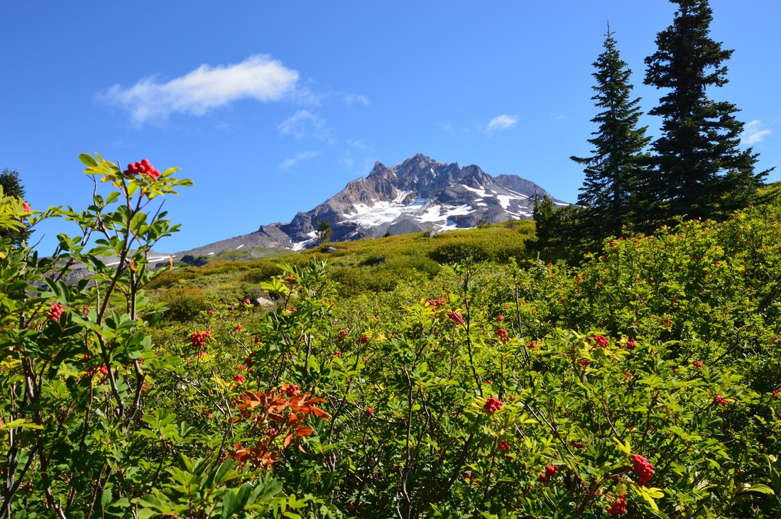 Hiking in the Mt Hood Wilderness