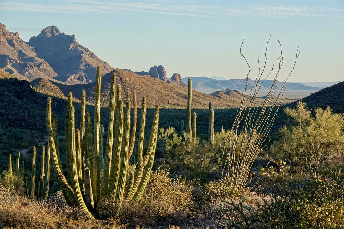Organ Pipe Cactus and the Ajo Mountains