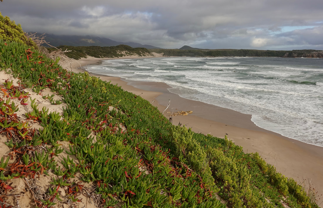 Mulcahy Bay on the west coast of Tasmania hiking