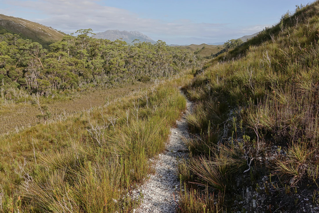 Reaching the Port Davey track