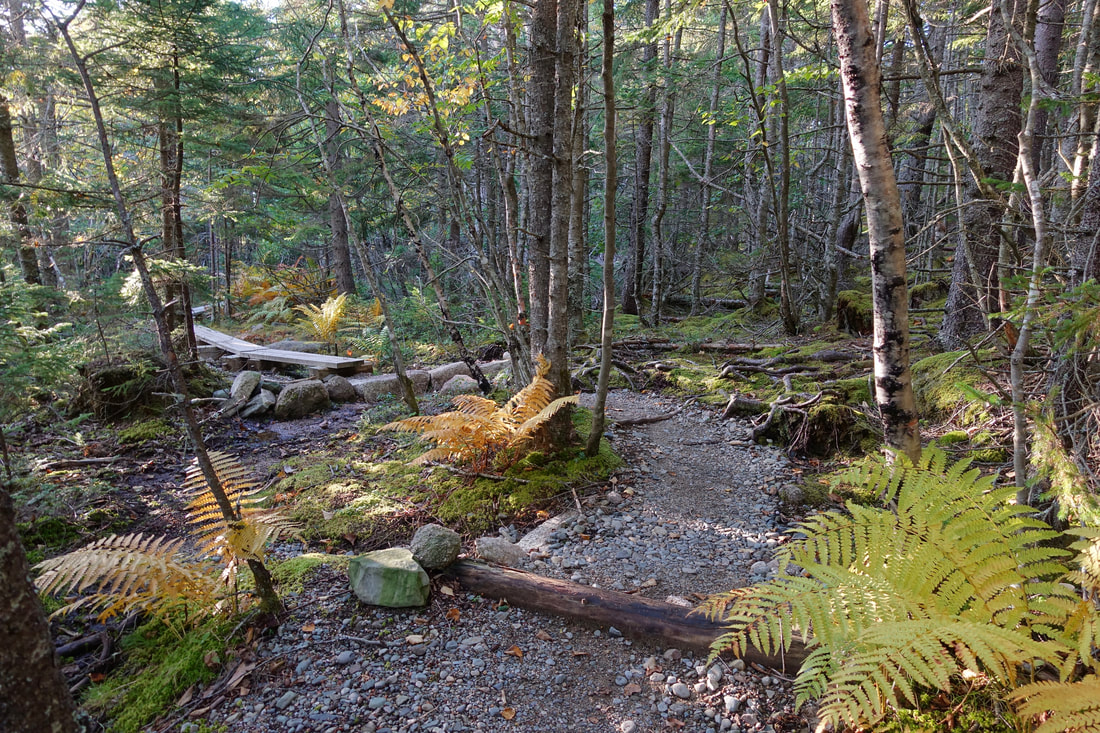 Boardwalks on the Little Cape trail in Maine
