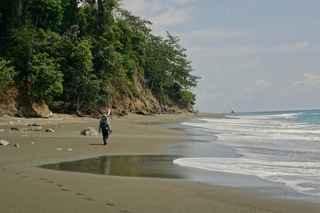 Beach walk from Sirena to Le Leona in Corcovado