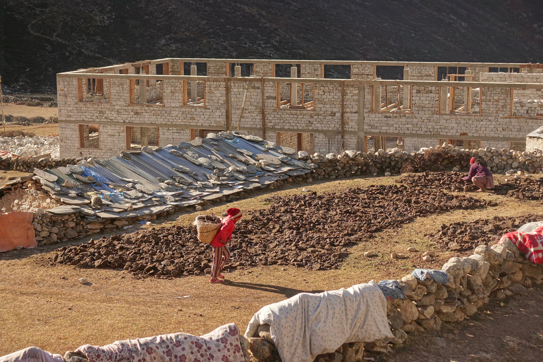 Collecting yak dung and drying it out in the morning sunshine